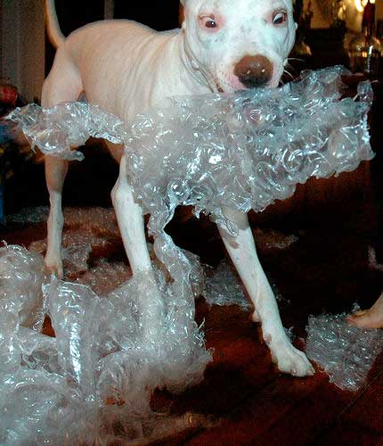 bubblewrapDog